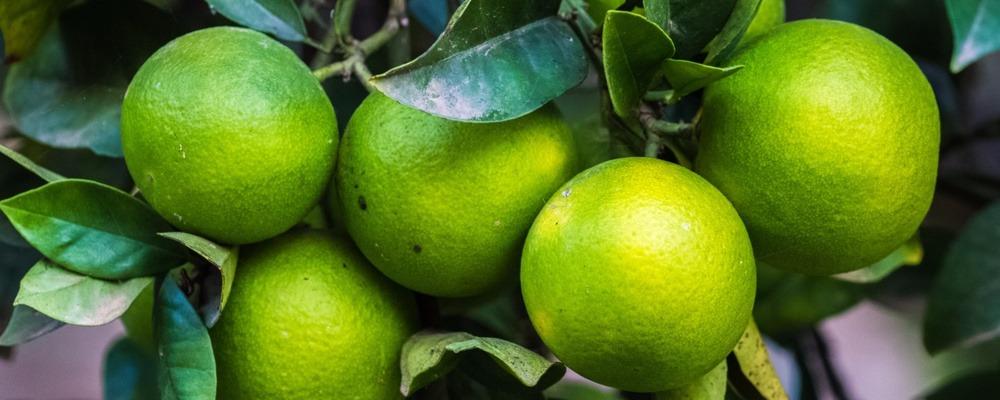 Lemon_1000x400