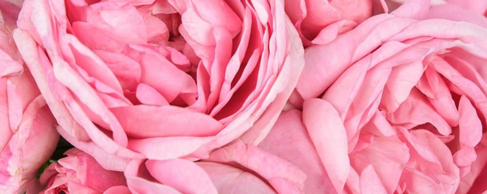 Rose-petals_1000x400