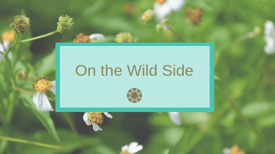On the Wild Side - wild herbal medicine blog