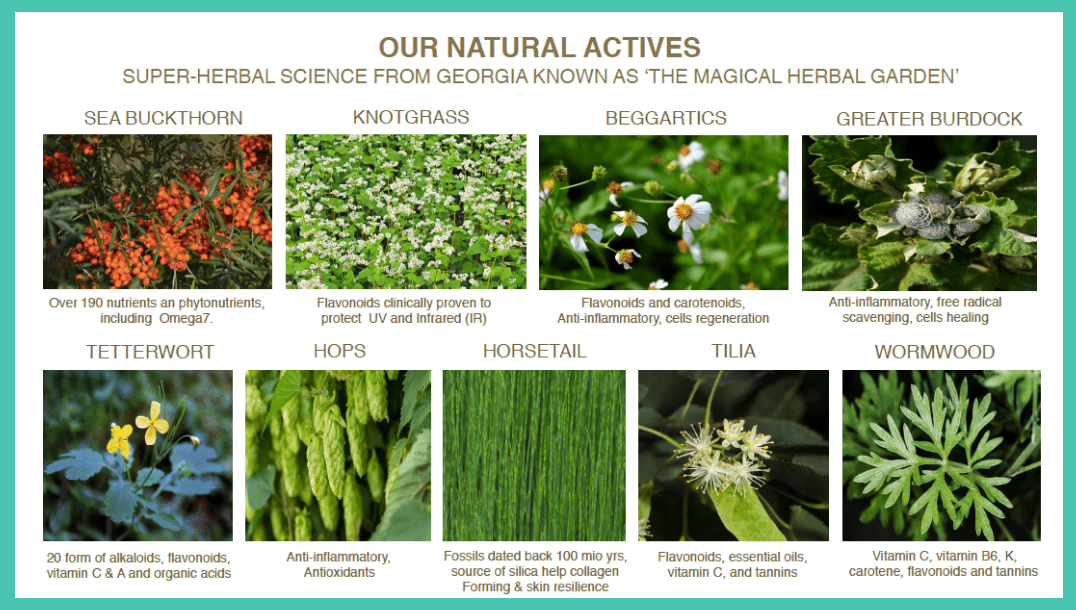 Our Natural Actives - Herbal Science from Georgia